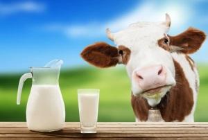 Срок годности домашнего коровьего и козьего
