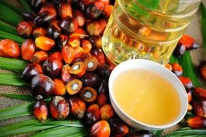 Пальмовое масло - вред или польза в продуктах?