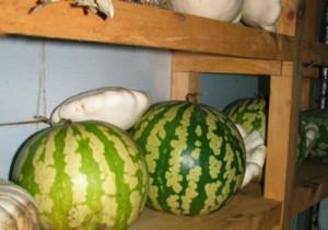 Где можно держать ягоду в домашних условиях?