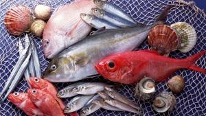 Срок хранения охлажденной рыбы