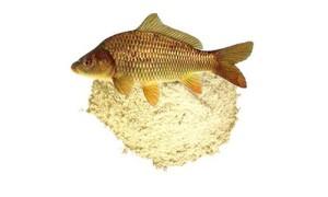 Условия для рыбной