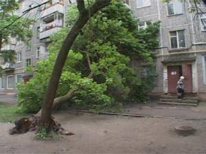 Что делать, если дерево возле дома аварийное?