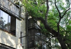 Можно ли самому спилить дерево или ветки, закрывающие окно квартиры?