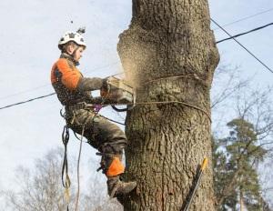 Спилить дерево во дворе - куда обратиться?